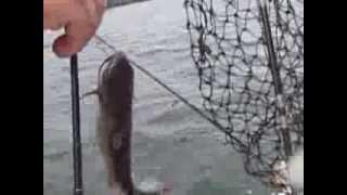 Cooler Full of Catfish at Calaveras Lake
