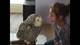 Histoire d'amour entre une petite fille et son hibou... Chouette ! 😉