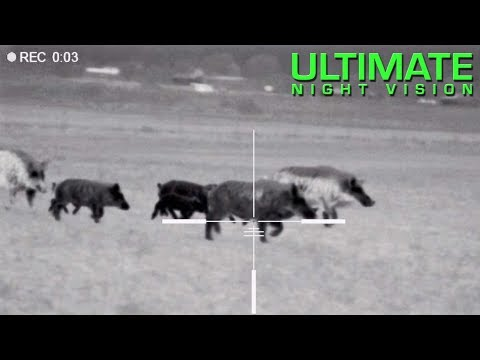 Xxx Mp4 125 Hogs Down With The Pulsar Trail XQ50 XP50 Hunting With Thermal 3gp Sex