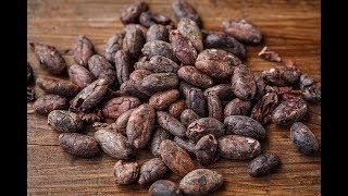 Proceso de Cosecha y Beneficio del Cacao - TvAgro por Juan Gonzalo Angel