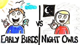 Early Birds vs Night Owls