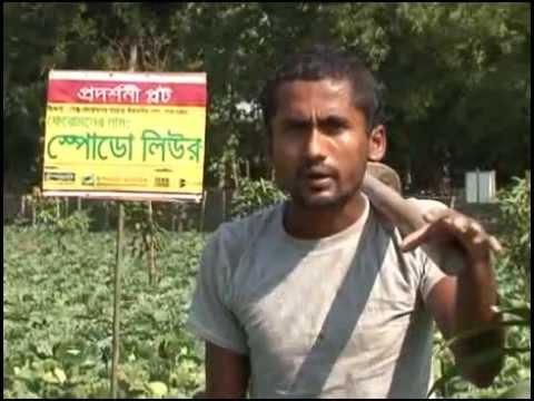 Banglar Krishi 61 (SEX FAROMAN, BaLai Nasok, Golda Chingri Chas)