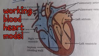 ✔working human heart | science model || 10th class working heart model | science project | bio model