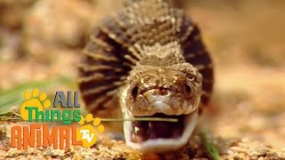 SNAKES | Animals for children. Kids videos. Kindergarten. Preschool learning