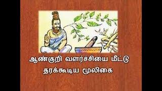 ஆண்குறி வளர்ச்சியை தரக்கூடிய மூலிகை -herbal Medicine In Tamil - Siththarkal Ulagam