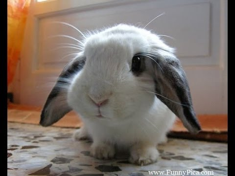Funny video animals MUST SEE , EPIC (Rabbit Got Scared Badly )
