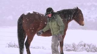 My time with 3 Horses 2 Dogs and 2 Women on Xmas Eve day 2015