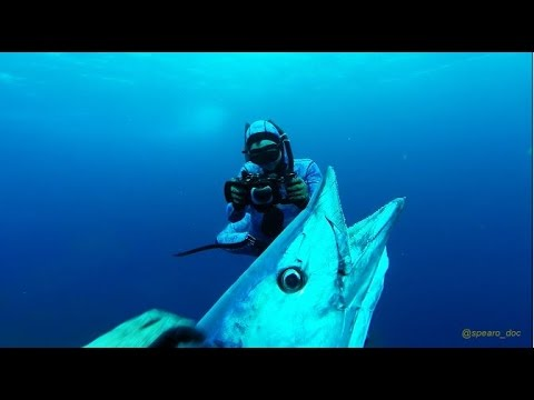 Best of 2016 North Carolina Spearfishing - Wahoo & mix