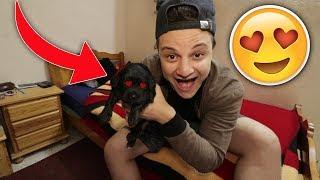 أخيراً كبرو الكلاب !! (كلبي الجديد) 😍🐶