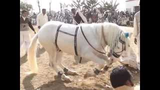 gora jalwa dance gujrat pakistan hourse dance