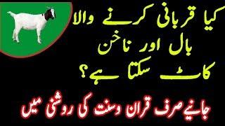 Qurbani se Pehle baal katna in urdu hindi|Qurbani ke masail in Urdu|masail e qurbani