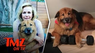 Chelsea Handler Loses Another Dog | TMZ TV