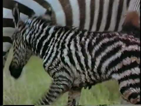 Vida Selvagem África Selvagem Parte 4 5
