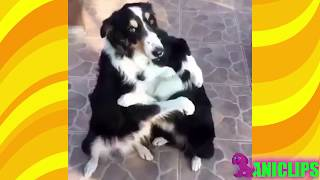 Unbelievable Unlikely Animal Friendships ✯ Funny Animals Compilation