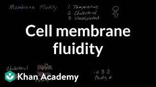 Cell membrane fluidity | Cells | MCAT | Khan Academy