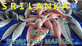 🇱🇰 SRI LANKA - GALLE FISH MARKET BAZAAR