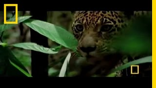 Big Cats | National Geographic