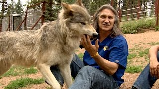 Dr. Jeff Treats a Curious Wolfpack