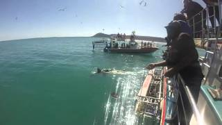 Shark Cage Diving in Hermanus, South Africa