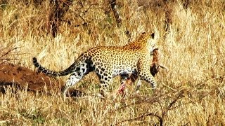 tanzania serengeti part 2