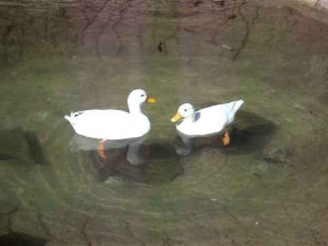 Xxx Mp4 Ducks Having Sex At Zoo 3gp Sex