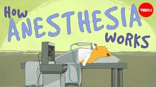 How does anesthesia work? - Steven Zheng