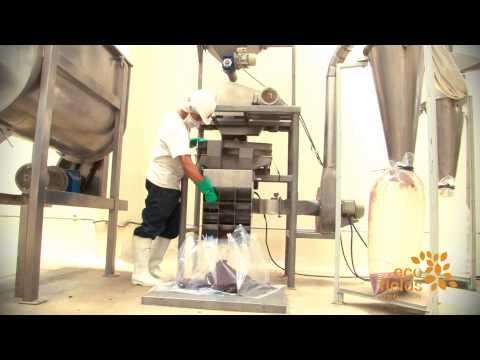 Cacao en grano orgánico Eco Fields