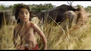 DŽIUNGLIŲ KNYGA (Jungle Book) kinuose nuo balandžio 15 d.