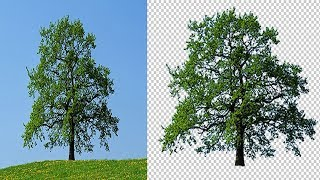 How to Cut Out Tree in Photoshop ( The Easy Way )