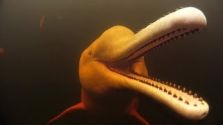 Pink Dolphins in the Amazon | Action Cam | Sony