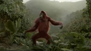 Steve Miller Band - Jungle Love