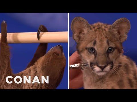 Animal Expert David Mizejewski Sloth & Cougar Kitten CONAN on TBS