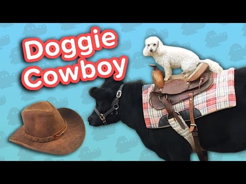 Doggie Cowboy & Bouncing Kittens Funny Animal Compilation