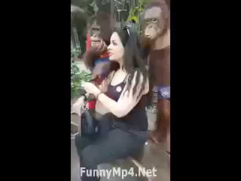 Monkey touch the boobs of hot girl very funny