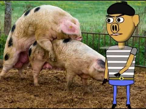 Xxx Mp4 Pigs Having Sex While French Pig Boy Comments 3gp Sex