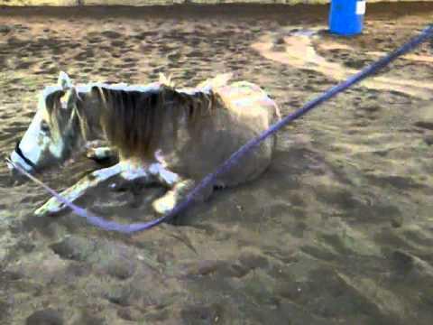 Xxx Mp4 Stupid Horse 3GP 3gp Sex