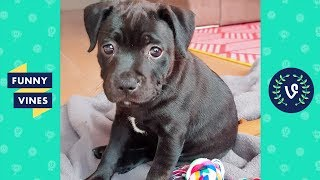 TRY NOT TO LAUGH - Ultimate FUNNY & CUTE Animal Videos Compilation | Funny Vines July 2018