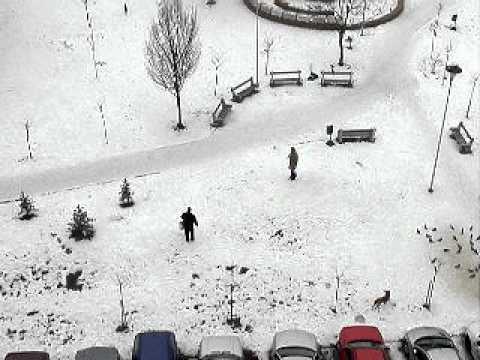 Sarajevo x Napad na prolaznicu od strane pasa lutalica