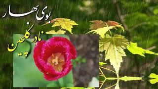 IRAN, Spring, Nowruz, بوي بهار ـ بوى نوروز ـ بوى پيروزى ؛