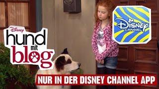 HUND MIT BLOG - Clip: Prinzessin | Disney Channel App