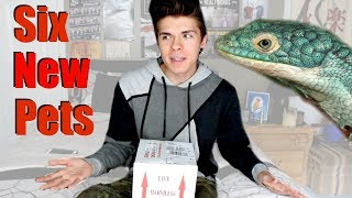 Unboxing Abronia Lizards! - I Got 6 New Pets