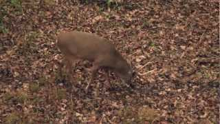 Bowhunting Iowa Whitetail Bucks with Hunting TV Show Heartland Bowhunter