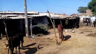 Matar-Mahelaj-Kheda by Road | On the Bike of Yunusbhai