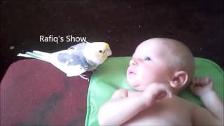 Parrot and kids talking funny. The Rafiq Show