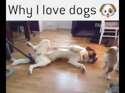 Why I love Dogs..