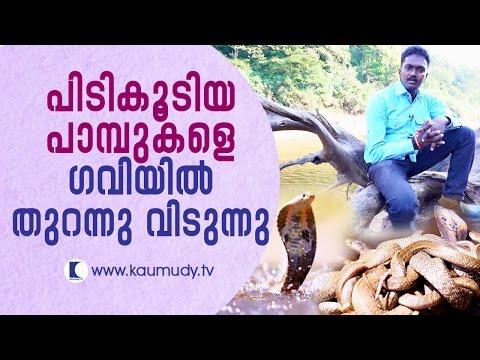 Vava Suresh releases captured snakes into Gavi Forest | Snake Master EP #233 | Kaumudy TV