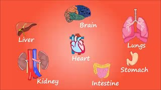 HUMAN ORGANS FOR DUMMIES - NAMES AND LOCATIONS - BASICS- Health 2016