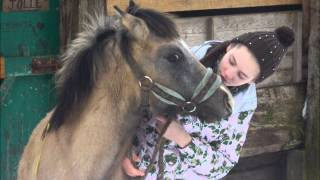La plus belle histoire d'amour entre un cheval et une fille - rivers flows in you