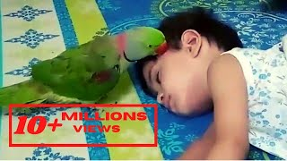Funny Parrot - Get up let's play - My cute parrot wants to play with his Bestie