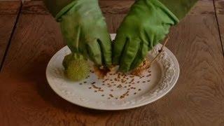 How Do I Use Datura Seeds? : Datura Seeds